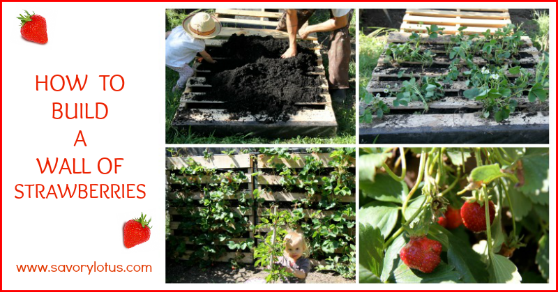 Do you want to make your own strawberry wall? Savorylotus has the perfect DIY Strawberry wall for you!
