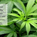Why Hemp Should Be Legalized: Economical and Environmental Benefits