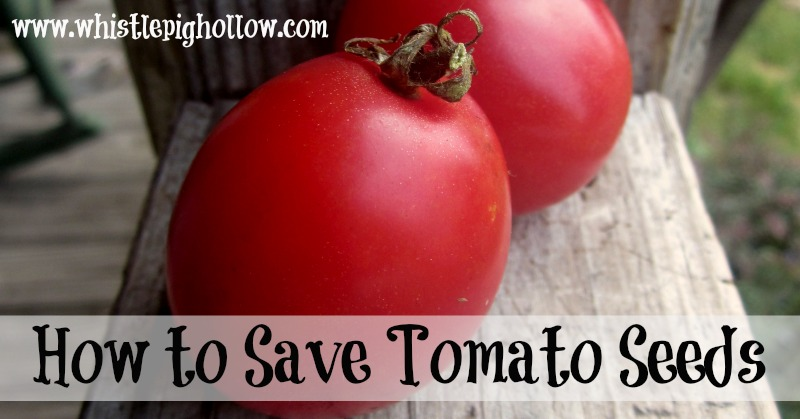 Whistlepighollow Tells you how to save those tomato seeds for next year.