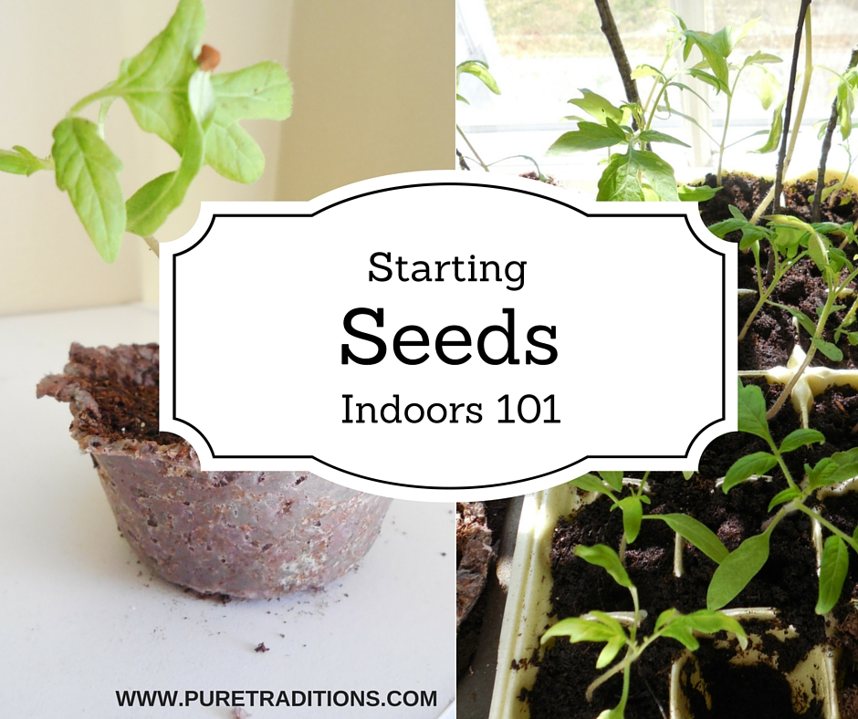 Starting Seeds Indoors 101 - Pure Traditions