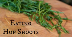 Eating-Hop-Shoots