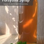 Forsythia Syrup Recipe